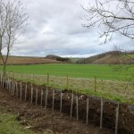 400 trees are planted around the site to close gaps in the hedges and generally improve the appearance